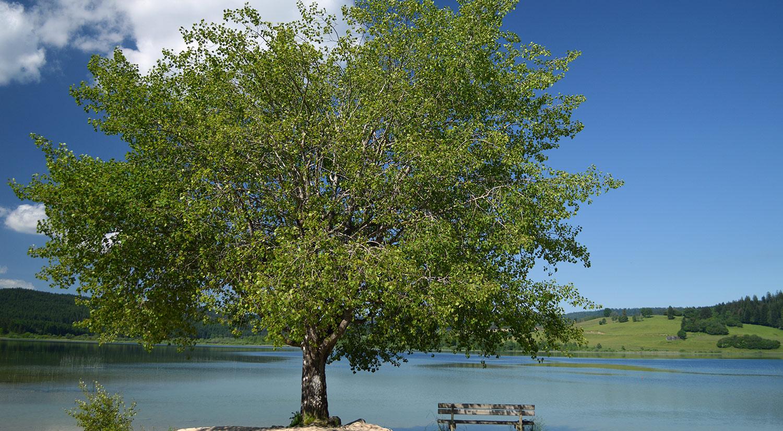 Lac Remoray